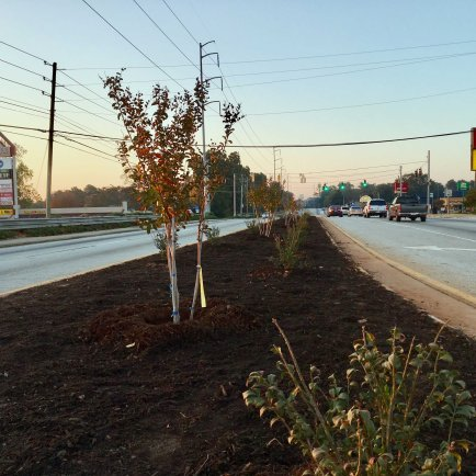 After the Planting-S.Hairston median