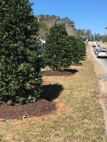 Planted trees on South Hairston leading to Hairston Park